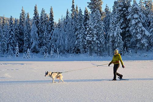 greatlappland_husky-trekking