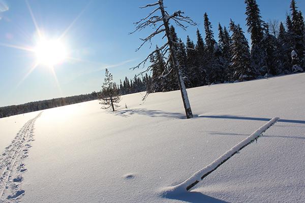 schwedisch-lappland-crosscountry-2
