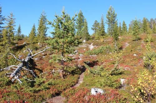 great-lappland-trekking4